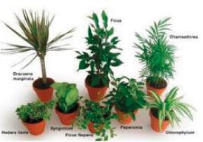 Plus de 8 variétés de plantes dépolluantes