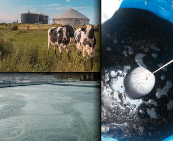 Améliorer la qualité et la quantité de biogaz, réduire les nuisances, stabiliser les boues de STEP, améliorer la qualité agronomique du digestat à composter avec la solution de Catalyse Biologique (solution bioactive).