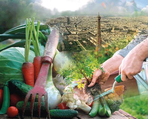 La Ferme Urbaine est productrice d'aliments ainsi que de fonctions économiques et sociales.