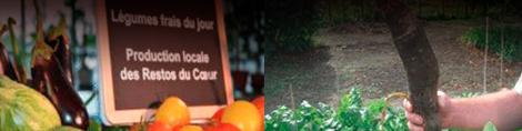 Ferme urbaine : production de fruits et légumes locale
