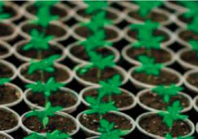 Plants à la demande pour l'aménagement paysager et la végétalisation