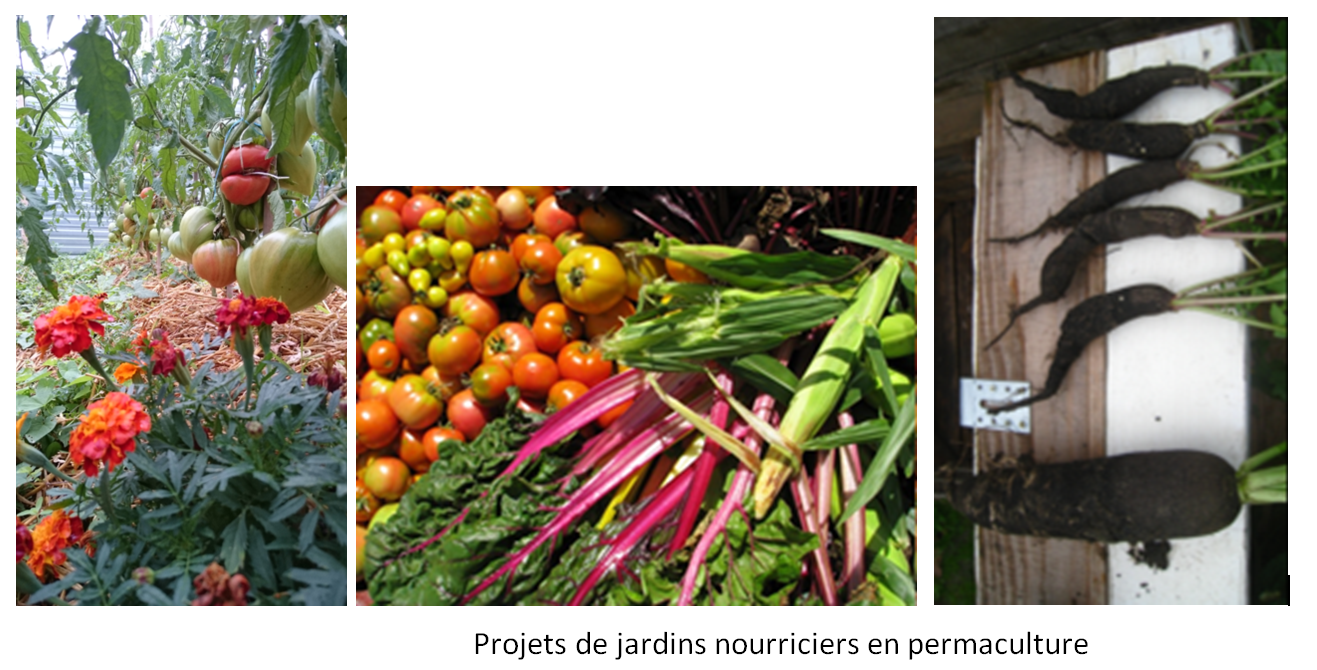 Projets de jardins nourriciers en permaculture
