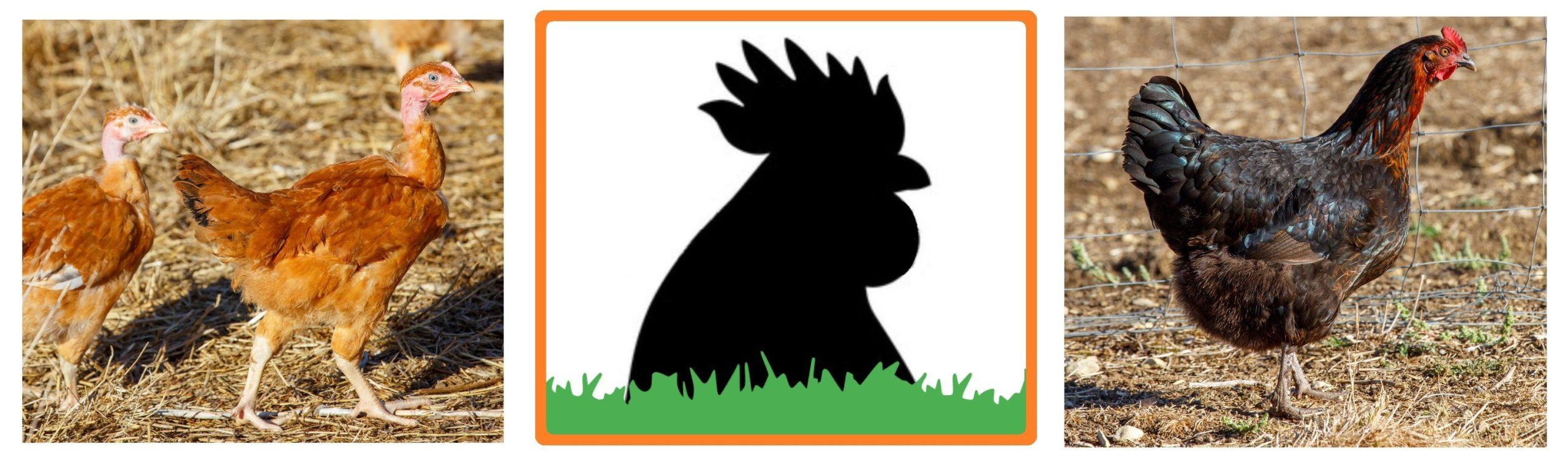 NatureSorb Agro pour les élevages avicoles