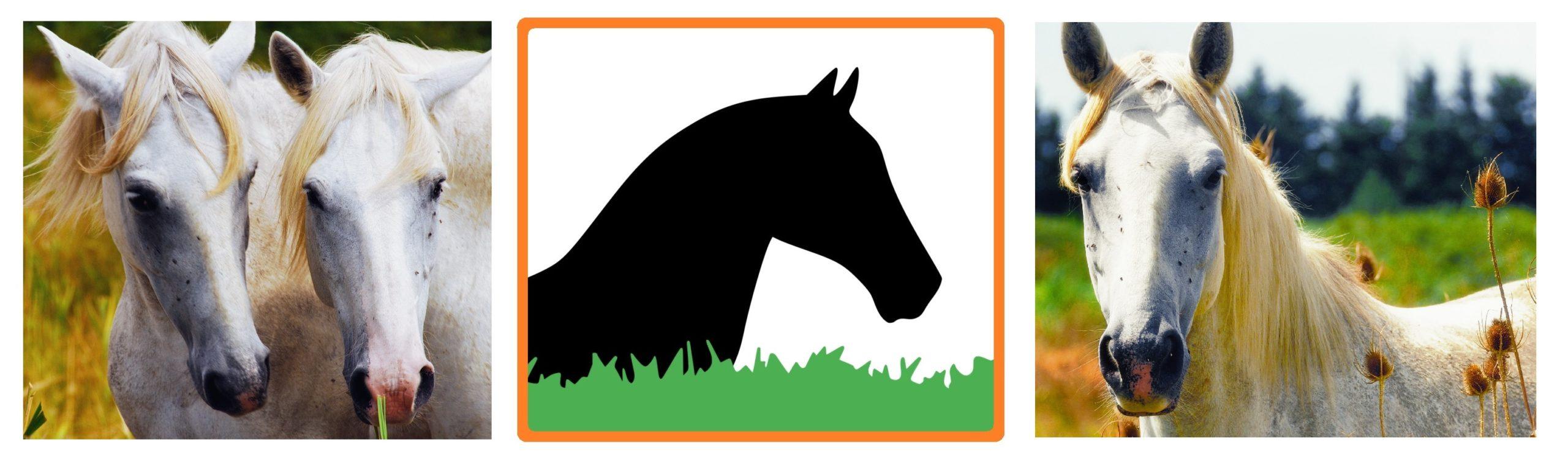 NatureSorb Agro élevages équins