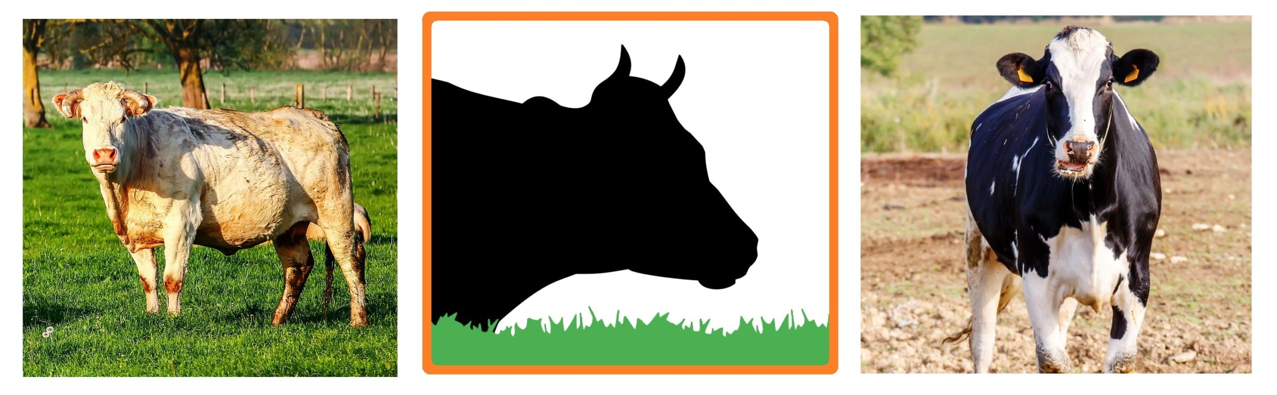 NatureSorb Agro élevages bovins